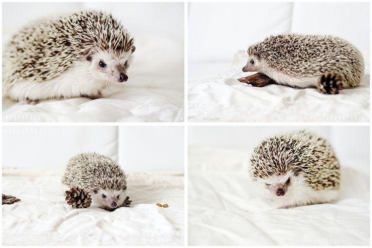 cute by kofaragozsuzsiphotos