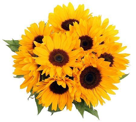 Smil, solsikkebukett fra Mestergrønn. Om denne nettbutikken: http://nettbutikknytt.no/mestergronn-no/