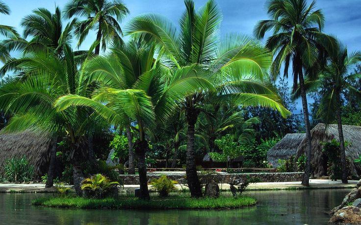 Palmeras en Oahu (en hawaiano Oʻahu) es la isla más poblada de Hawái..