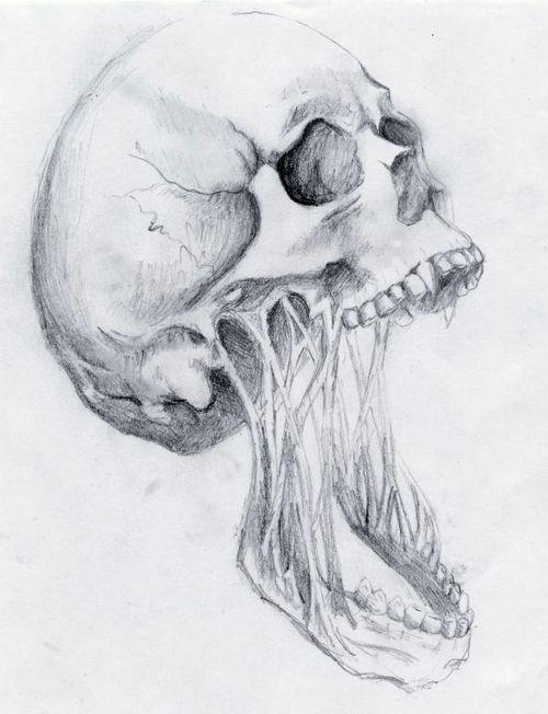cranium decay pencil drawing