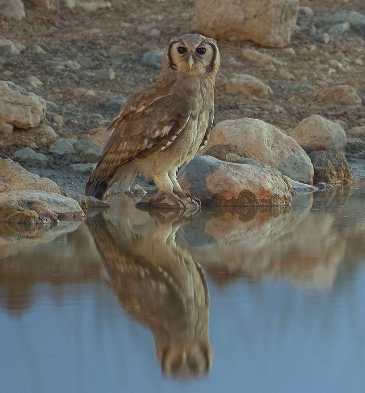 2012-giant-eagle-owl.jpg