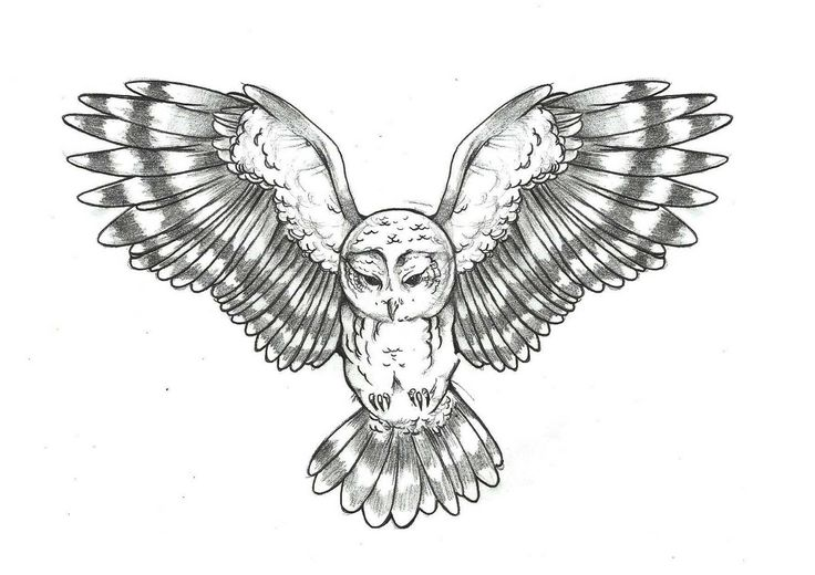 owl tattoo ideas: Tattoo Ideas, Barns Owl Tattoo, Badass Owl Tattoo, Tattoo Artists, Ink Tattoo, Tattoo Design, Owl Drawings, Owl Flying Tattoo, Popular Pin