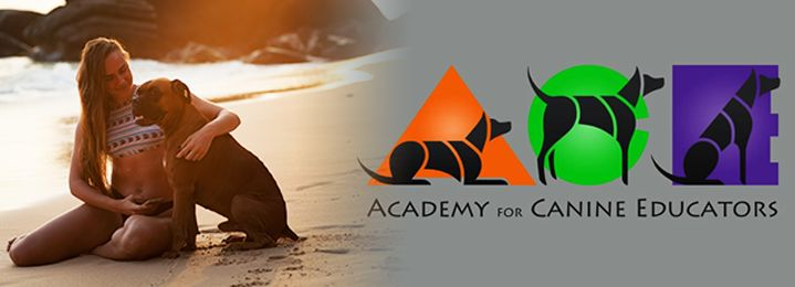 Save 50% on Canine First Responder & First Aid Certification Course by ACE Academy for Canine Education! You love your pet - now learn to help them! Grab your coupon and join ACe Academy today!