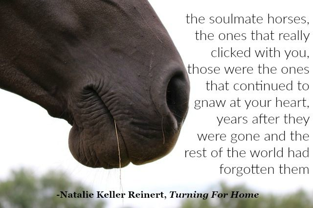 The most-highlighted passage in my novel TURNING FOR HOME says a lot about readers and their relationship with horses. #equestrian #horses #OTTB #horseracing
