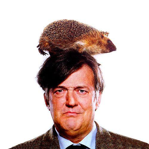 coolest englishman ever: Wild Animal, Inspiration, Friends, Faces, British Men, Stephen Fries, Cute Pet, Hedgehogs, Black