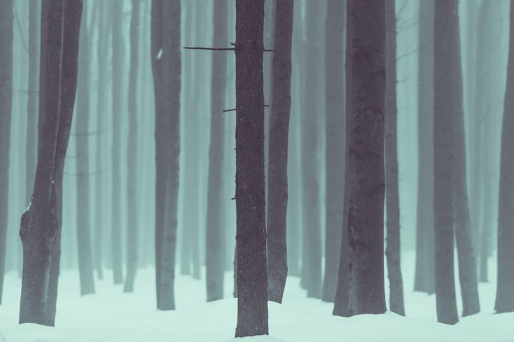 Frozen Kingdom #photography #forest #trees #landscape #nature #hike #wanderlust #trees #wood #outdoor #trunk #minimalim #minimal #minimalistic