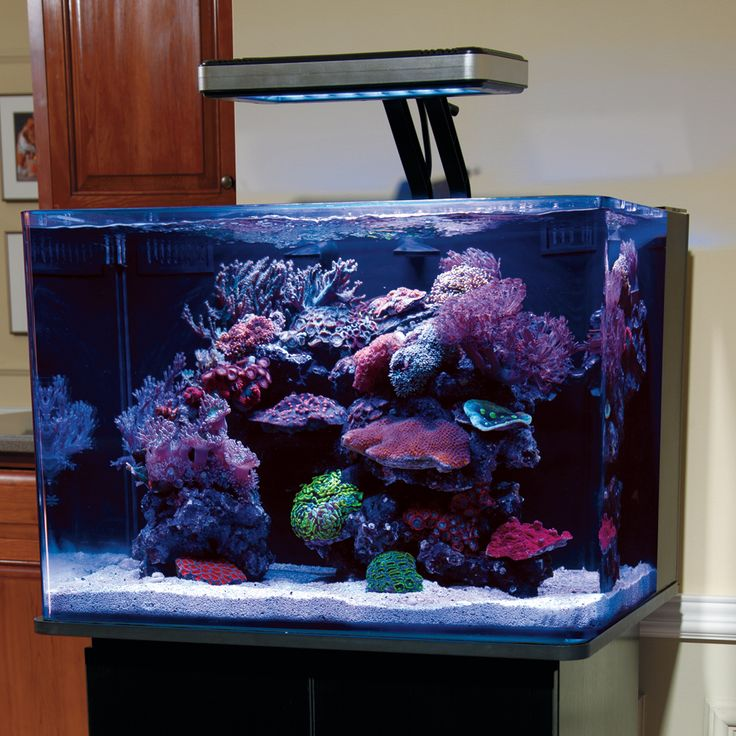 1000 images about aquascaping freshwater tropical for Deep blue fish tanks