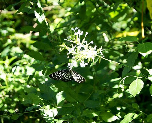 #Butterfly #Flower #Animal #Nature