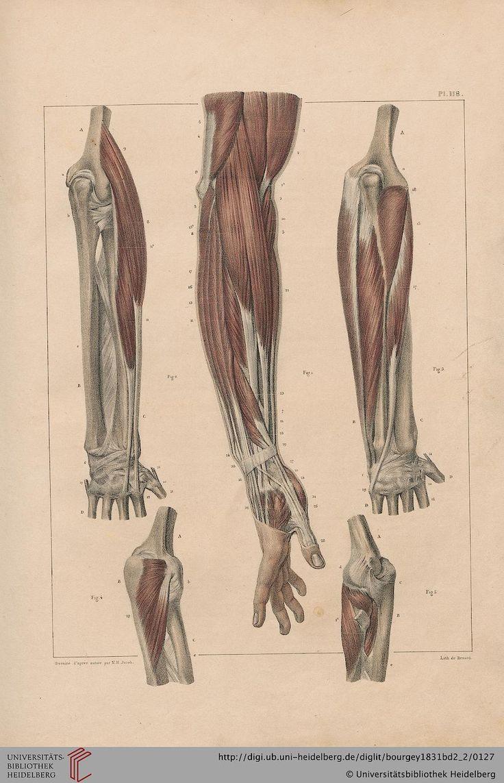 Traité complet de l'anatomie de l'homme comprenant la medecine operatoire, par le docteur Bourgery. Avec planches lithographiées d'après nature par N.H. Jacob. Author: Bourgery, Marc Jean, 1797-1849. Published: Paris : C. Delaunay, 1831-1854.