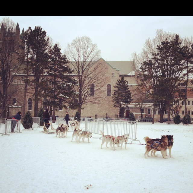 Dog sledding at the Ottawa winter carnival at University of Ottawa