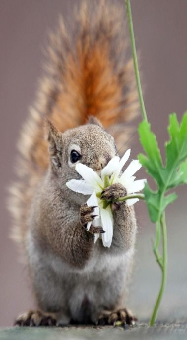 Always stop to take in the wonder of a daisy :)