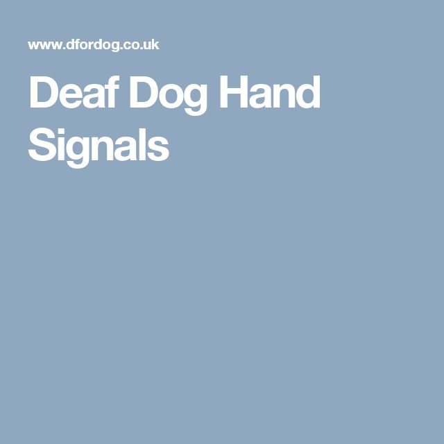 how to train a deaf dog to come