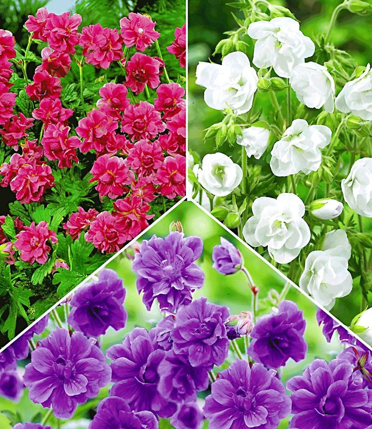 tolles winterfeste gartenblumen die die kalte gut uberstehen standort images oder fcaebcee