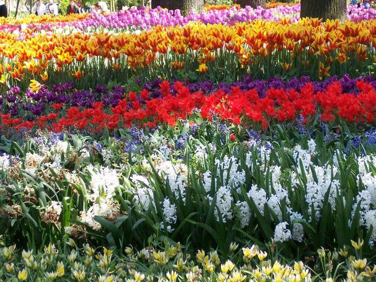 Festival dei Tulipani ad Istanbul Ad Istanbul ogni Aprile prende il via, dal 2006, il Lale Festivali, il Festival dei Tulipani. Nei mesi scorsi sono stati piantati nei parchi, nei viali, dalle aiuole...