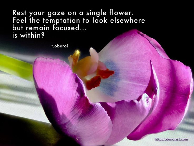 """Have a great day! """"Rest your gaze on a single flower. Feel the temptation to look elsewhere but remain focused...is within?"""" Please feel free to share it or leave a comment. My photographs and poems can be seen on my website, oberoiart.com"""