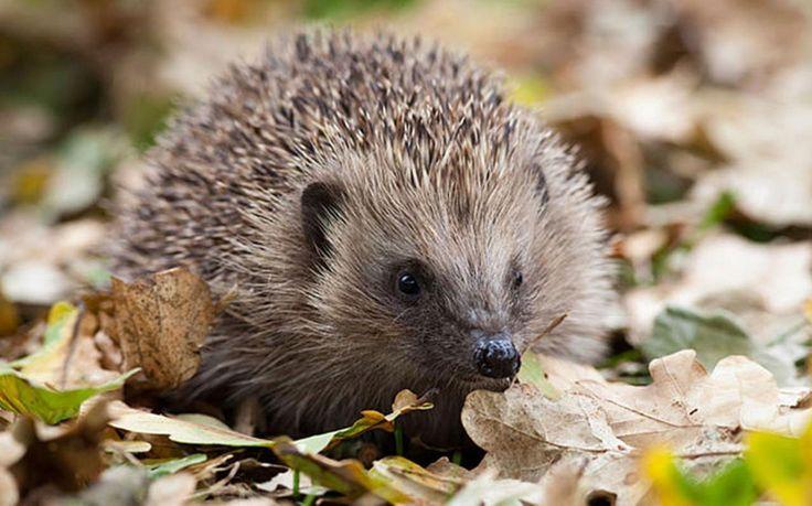 Article List of 25 ways to get wildlife in your garden