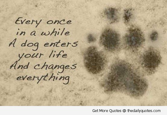 Dog-enters-your-life-quote-lovely-cute-puppy-love-animals-pics-sayings .
