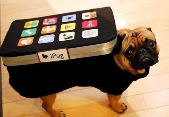The Top 10 Pinned Pet Halloween Costumes from Pinterest