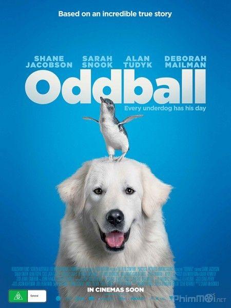 Chú chó Oddball - HD