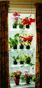Indoor Window Gardening with Indoor Window Plant Hangers I believe that these could be used for many things other than plants. Bottle or rock collections might be lovely!