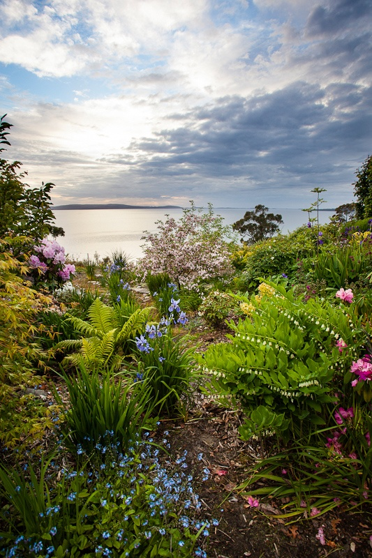 ~~Tasmanian Garden - Flowerpot, Tasmania, Australia by Claire Takacs~~
