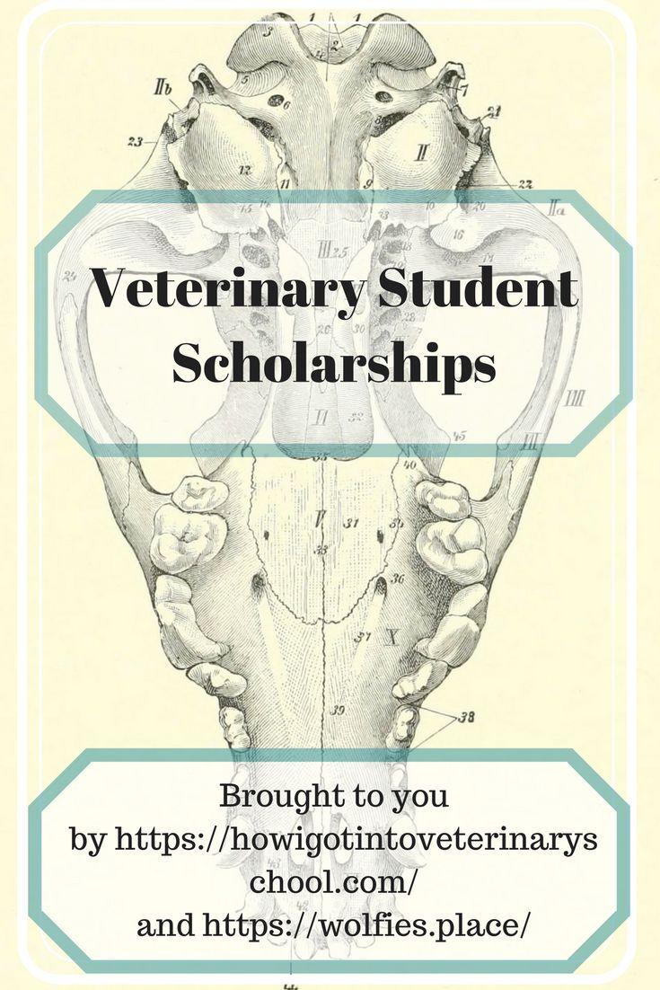 Veterinary student scholarships
