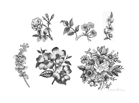 Black And White Flower Tattoo Outline Pics Download