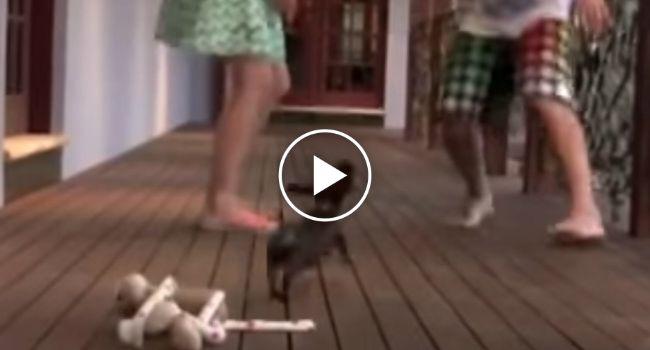 Cachorrinho Tenta Defender a Dona Quando Marido Finge Agredi-la