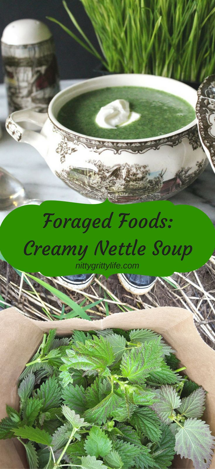 Foraged Foods Creamy Nettle Soup