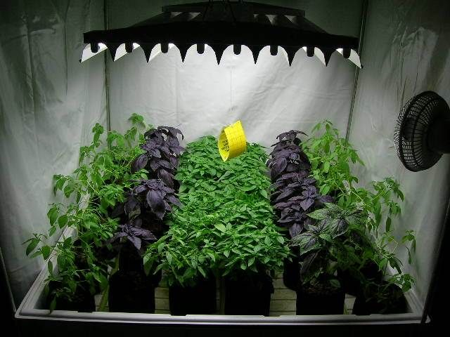 177 best images about hydroponic gardening on pinterest for Growing vegetables indoors