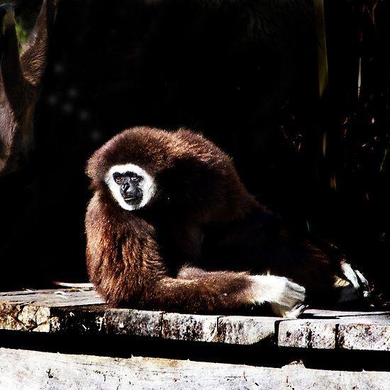 Dream Gibbon Dream