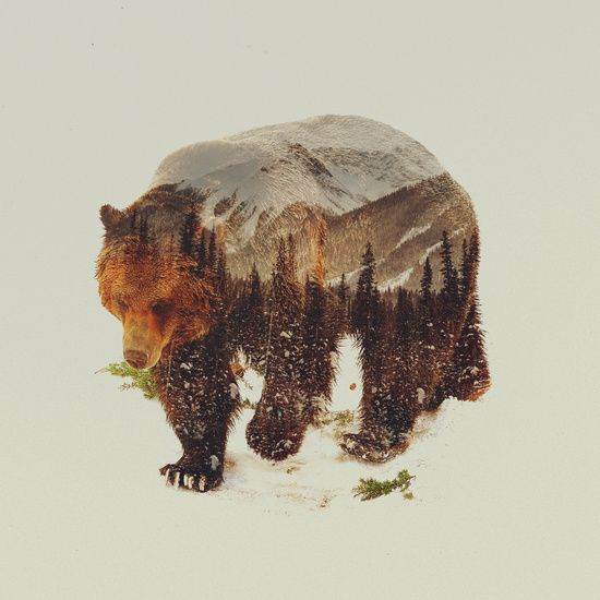 Poster | WILD GRIZZLY BEAR von Andreas Lie