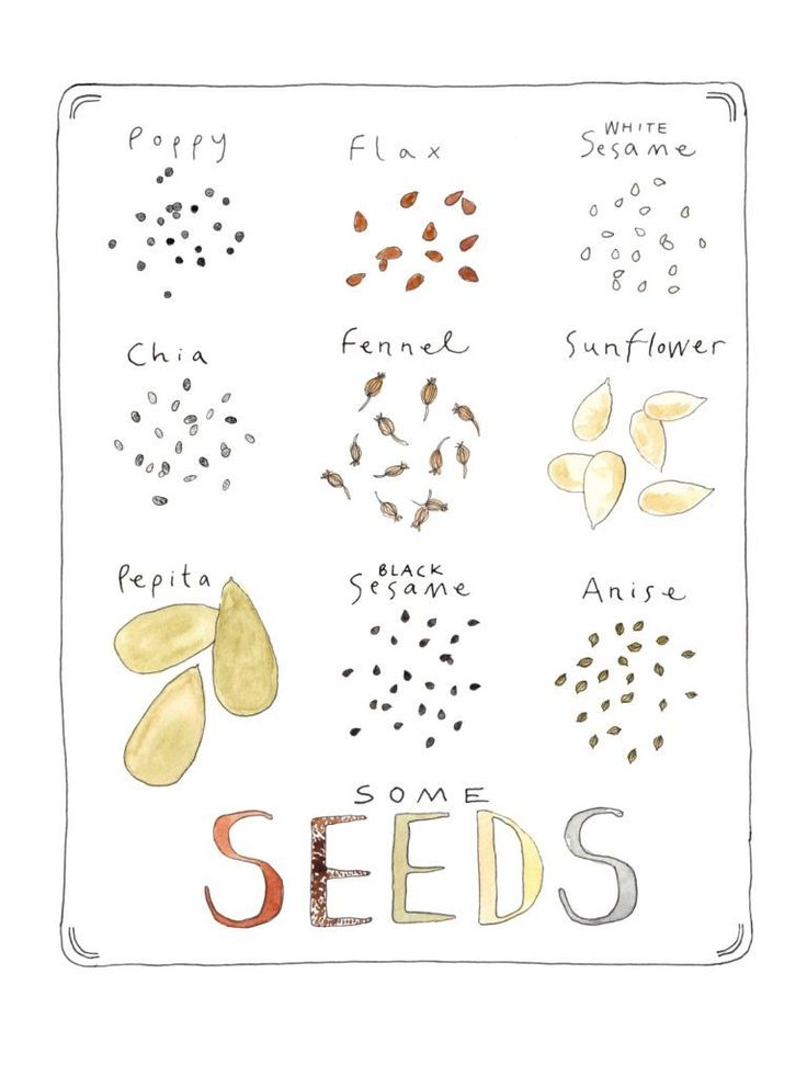 Some Seeds Illustrated Watercolor Art Print
