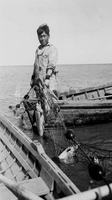 Fisherman (Eskimo) with salmon in net, 1938  by Marquette University Archives, via Flickr