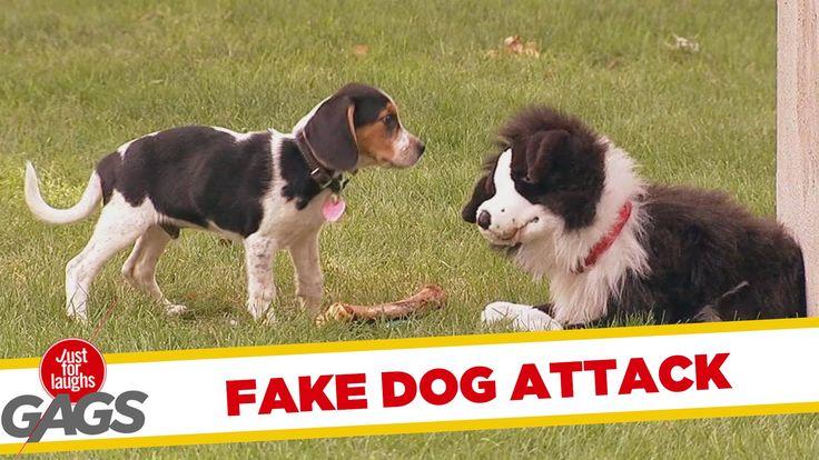 Stuffed Dog Attacks Real Dog