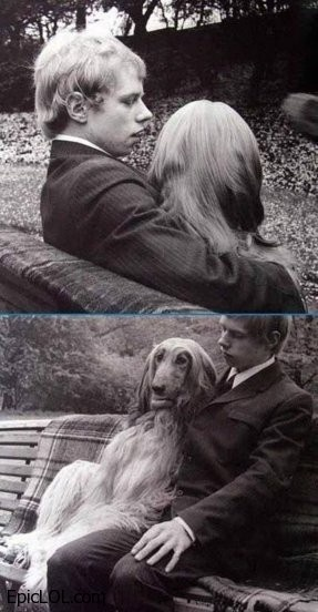look at how humanly that dog is sitting on the bench with her boyfriend. --> Valkye cuando sea grande :p