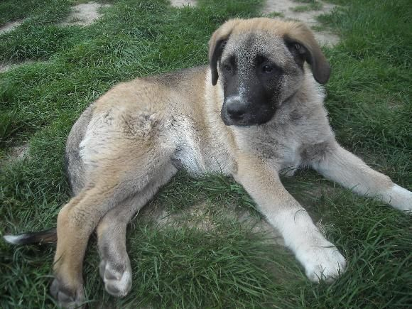 Max 3 měsíce 16,20 kg