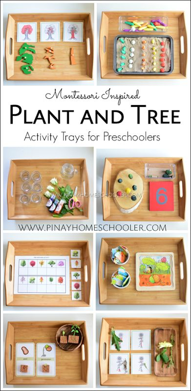 Montessori Inspired Plant and Tree activity trays for Preschoolers