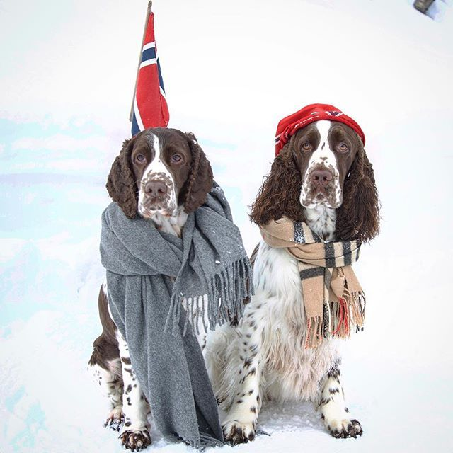 """""""Don't forget to keep warm! - Emma and Oliver are enjoying the cold, Norwegian mountains,"""" writes @Evelzz. #dogsofinstagram #pets #tagforlikes #FF"""