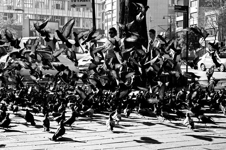 birds/MariuszChudy