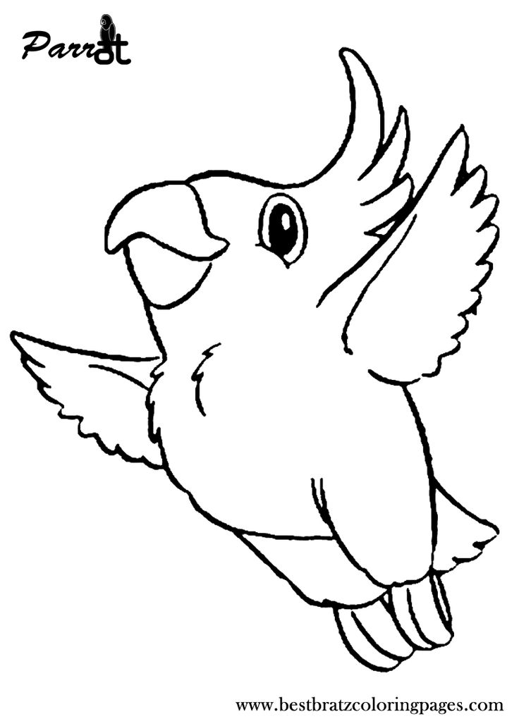 106 Best Parrot Coloring Pages Images On Pinterest