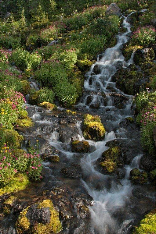 Wildflower hike at Bird Creek Meadows, S Cascades, Mt Adams      Yakama Nation