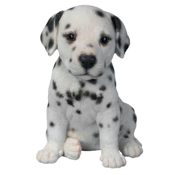 Dalmatian Puppy in Gift Box