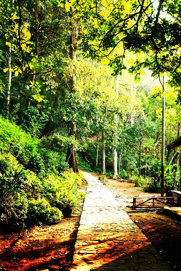 Juanda Forest Park, Bandung, Indonesia. You can walk from here to Maribaya, Lembang.