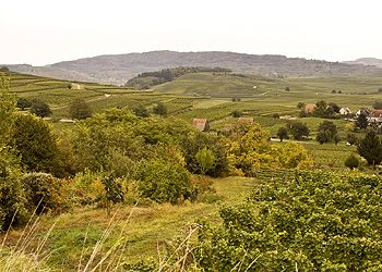 Oberrottweiler Henkenberg, a Great Rulaender/Grauburgunder from SALWEY Winery in Kaiserstuhl, Baden, Germany