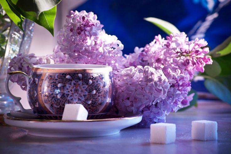 доброе утро сиреневые цветы картинки