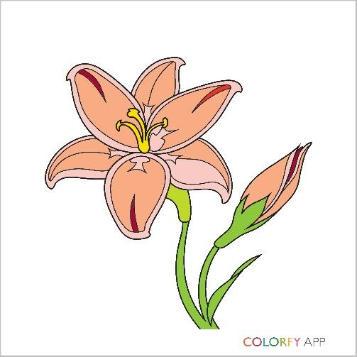 I colored this beautiful  flower
