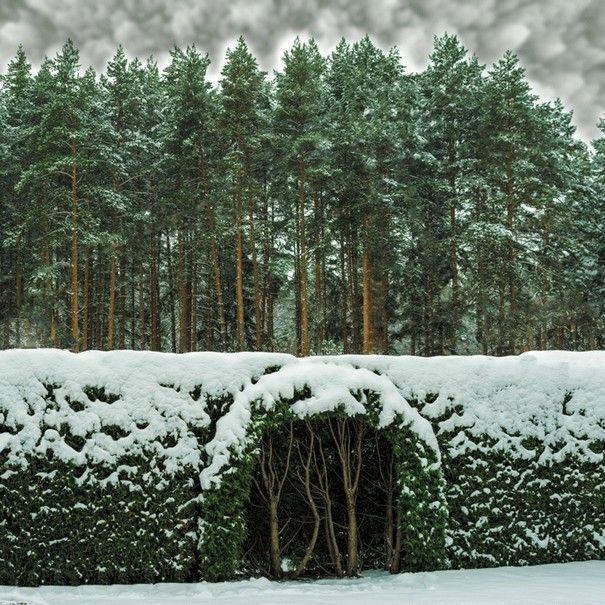 Ниша в живой изгороди - оригинальная идея для сада