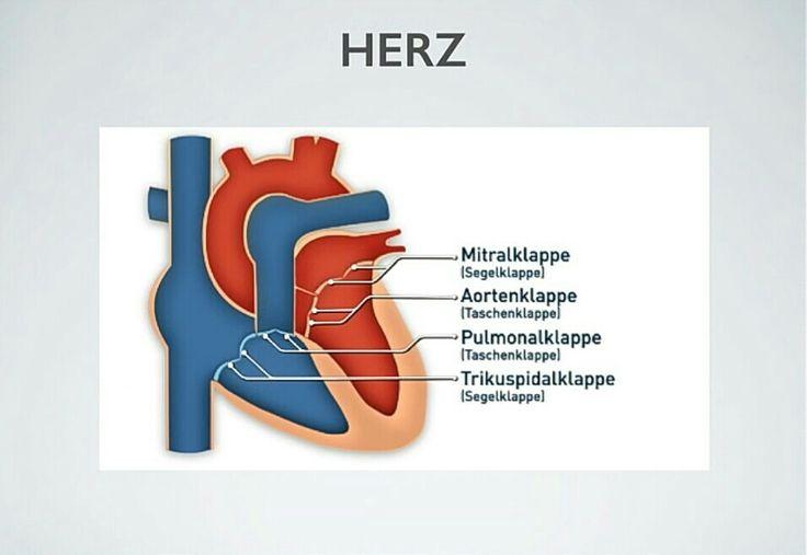 Kardiologie: Herzklappen
