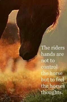 The riders hands are not to control the horse, but to feel the horse's thoughts. Quote courtesy of Jean-Luc Cornille, Science of Motion.